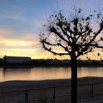 Sonnenuntergang am Rhein in Bonn
